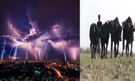 Buffalos and Lightning, Thunder, Shepherd